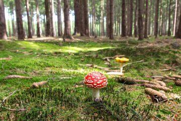 Jeder Wald hat etwas Magisches. Foto: mikezwei/pixabay