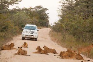 Wildbeobachtungsfahrt im Krüger Nationalpark, der Heimat der Big Five: Löwe, Leopard, Nashorn, Elefant und Büffel. Foto: djd/Abendsonne Afrika