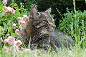 Katzen, die durch den Garten tigern, bedienen sich selbst an Gräsern und Kräutern. Foto: Poolplay/pixabay.com
