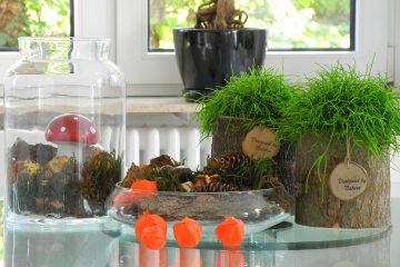 Arrangements aus Pflanzen.